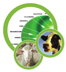 On-Farm Emissions Mitigation – Are We Doing Enough to Improve Animal Efficiency?
