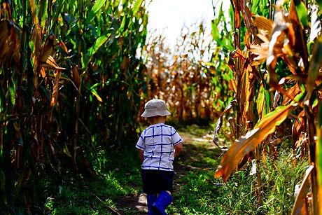 cornfield-3599229_1920.jpg