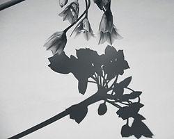 FL_004.jpg