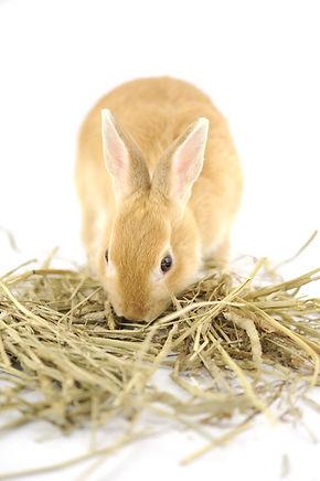 ウサギと牧草1.jpeg