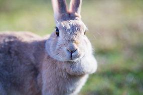 ウサギ.jpeg