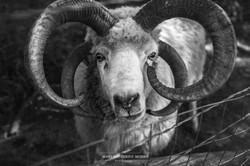 Sacred Way Sanctuary Animals