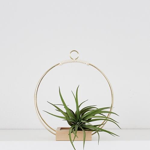 Braid & Wood Design Studio - Plant Hanger (Small)