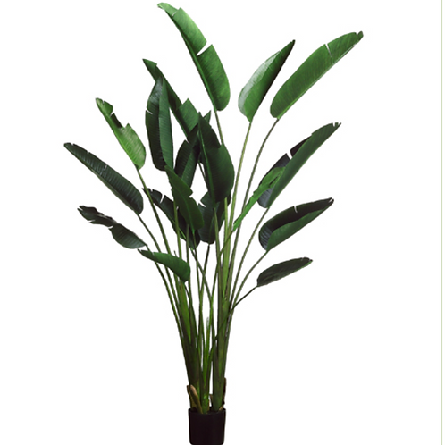 """93"""" Bird of Paradise Plant with 18 Leaves in Plastic Pot Green"""