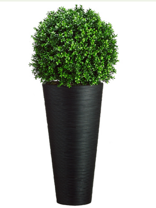 Boxwood Ball in Bamboo Container Green
