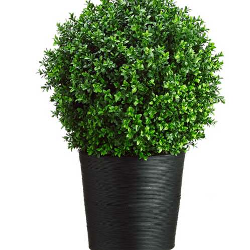 Boxwood Topiary in Bamboo Container Green