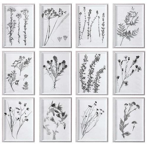 Contemporary Botanicals Framed Prints (Set of 12)