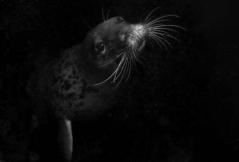 RobRobertston-Seal_IMG_0017-2.jpg