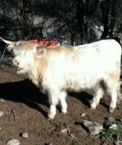 Gryphon Ranch Epsilon #52777
