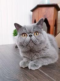 catsbuilding nelson qsn.jpg