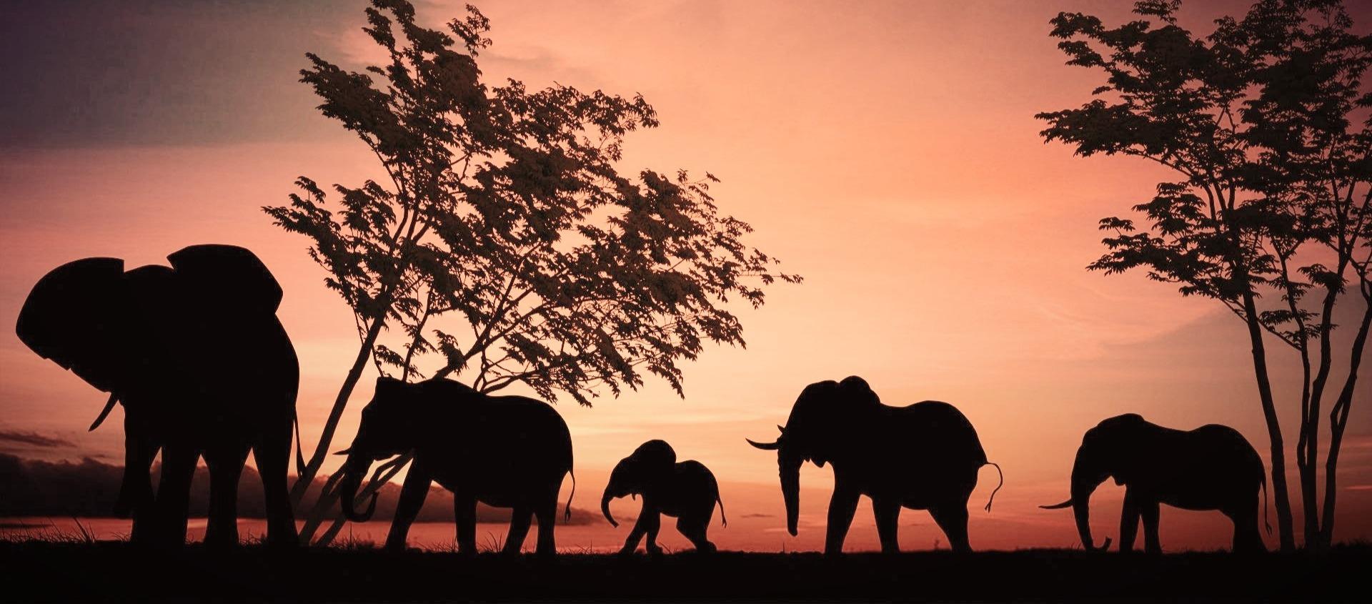 elephant-2231690_edited_edited