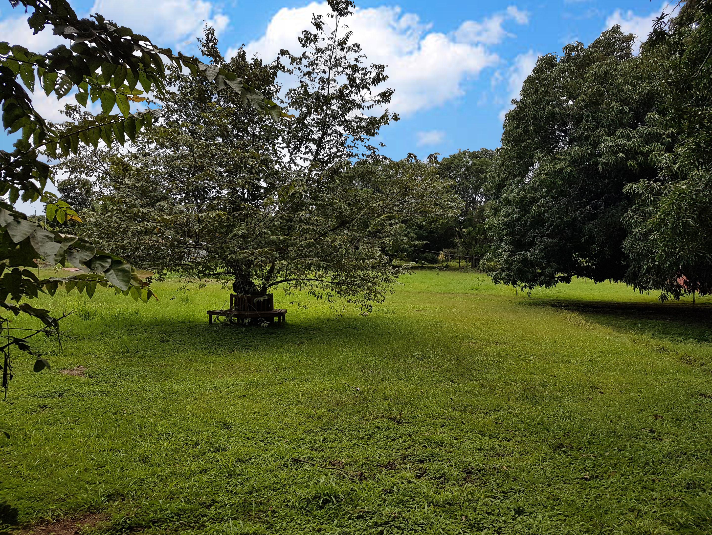 Lote Casita del Árbol (6)