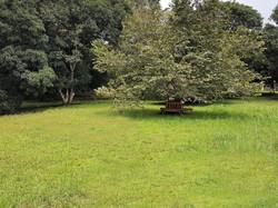 Lote Casita del Árbol (2)