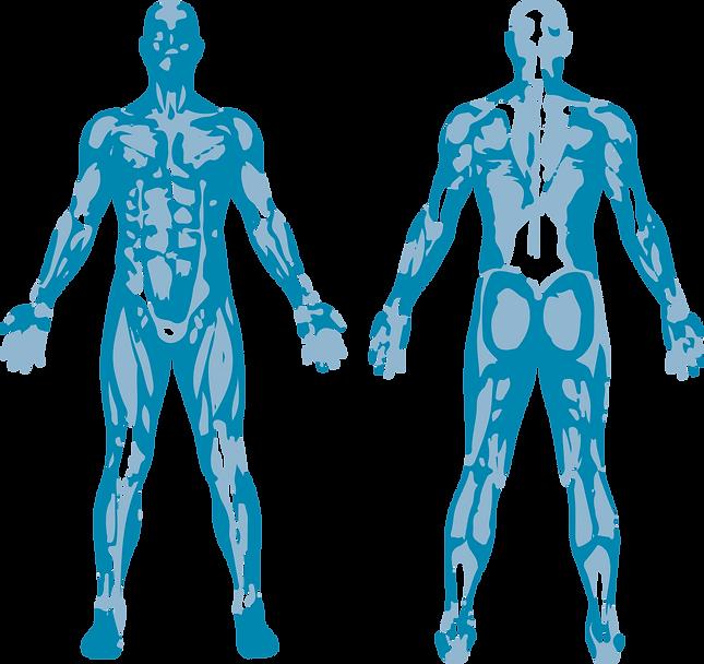 Fisioterapia . Hernias discales. Cefaleas. Migrañas. Lesiones deportivas.