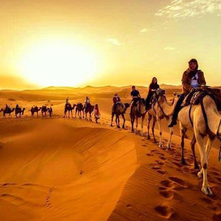 Camel Portada.jpg