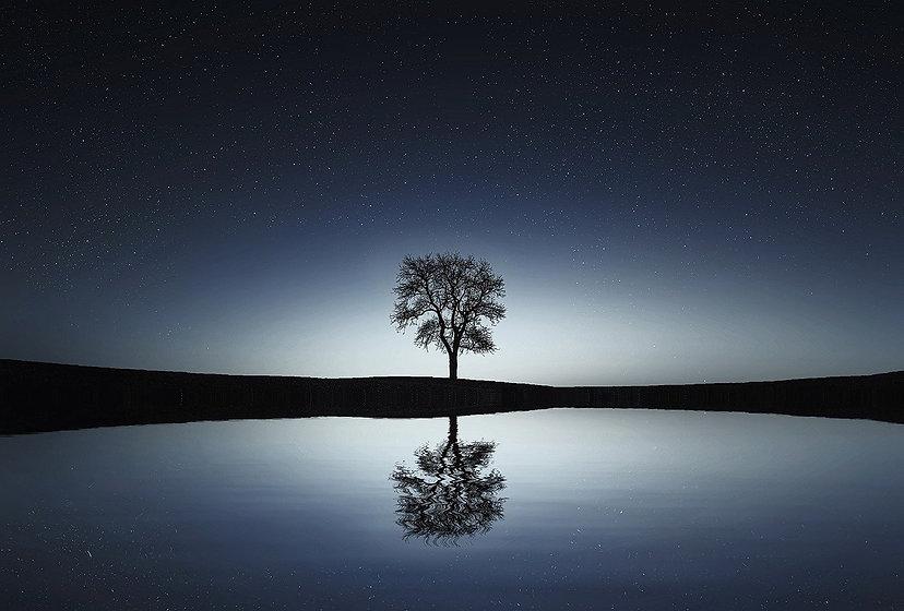 tree-736881_1280.jpg
