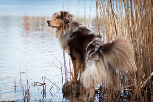 Hund (5).jpg