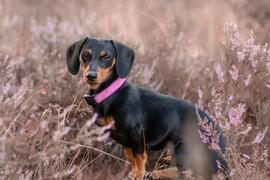 Hund (20).jpg