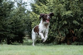 Hund (17).jpg