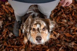 Hund (15).jpg