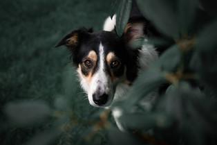 Hund (13).jpg