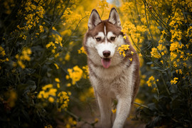 Hund (30).jpg