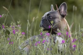 Hund (28).jpg