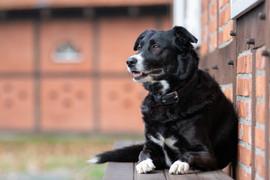 Hund (21).jpg