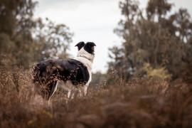 Hund (9).jpg