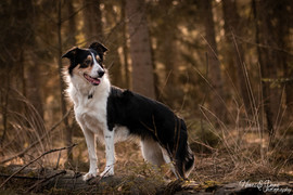 Hund (12).jpg