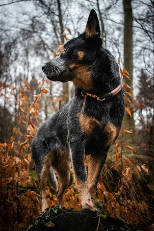 Hund (14).jpg