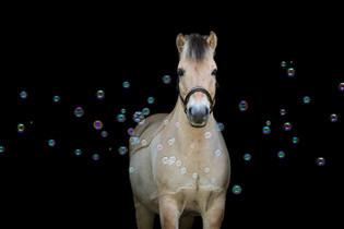 Seifenblasen (2).jpg