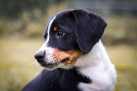 Hund (11).JPG