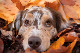 Hund (16).jpg