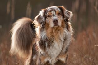 Hund (6).jpg