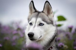 Hund (27).jpg