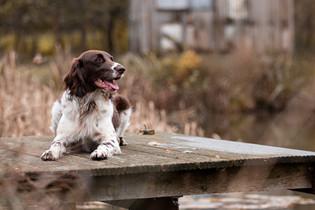 Hund (18).jpg