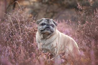 Hund (24).jpg