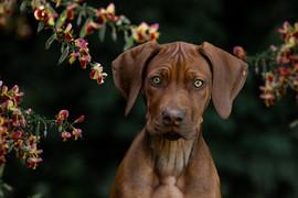 Hund (26).jpg