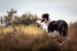 Hund (8).jpg