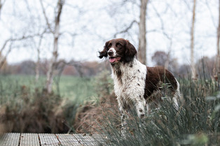 Hund (19).jpg