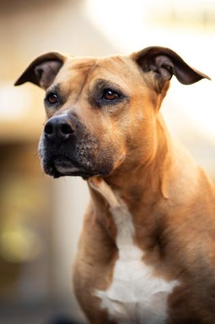 Hund (10).jpg