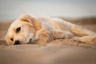 Hund (25).jpg