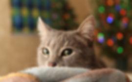 christmas-tree-3805104.jpg