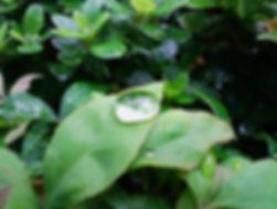 雨粒.jpg