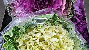 Sun Plums, Golden Kiwi & Variegated Kale