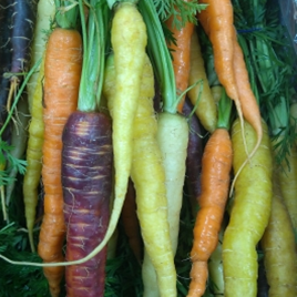 Bunched Heritage Carrots