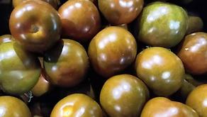 Kumatoes & Bunched Turnips