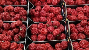 Strasberries... not a hybrid!