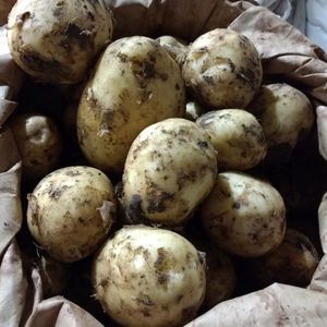 Kentish New Season Mid Potatoes